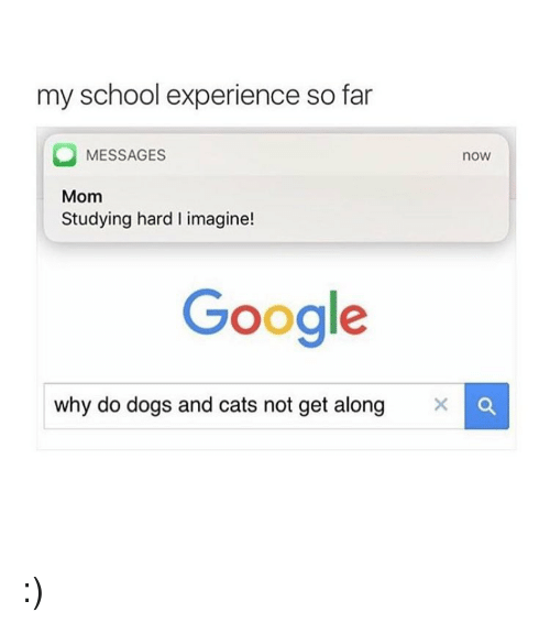 dog-and-cats: my school experience so far  MESSAGES  nOW  Mom  Studying hard l imagine!  Google  why do dogs and cats not get along X :)