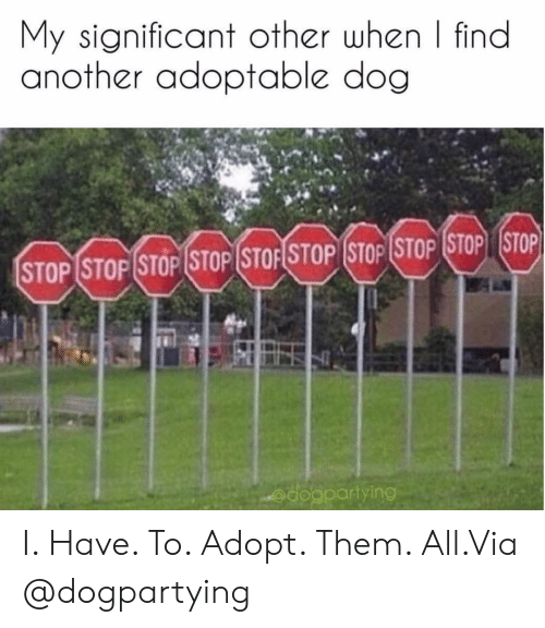 significant other: My significant other when | find  another adoptable dog  STOP (STOPİSTOP (STOP (STOFSTOP (STOP (STOP (STOP STOP  @dogpartying I. Have. To. Adopt. Them. All.Via @dogpartying