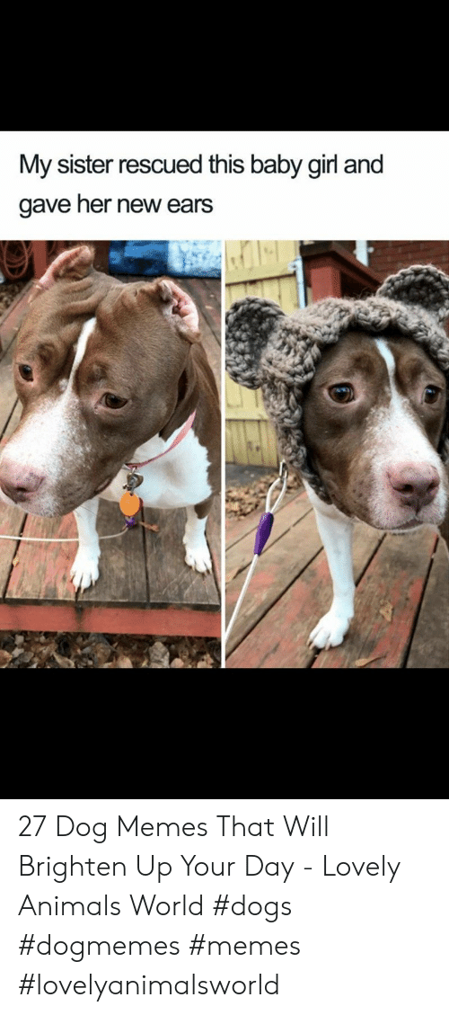 Dog Memes: My sister rescued this baby girl and  gave her new ears 27 Dog Memes That Will Brighten Up Your Day - Lovely Animals World #dogs  #dogmemes #memes #lovelyanimalsworld
