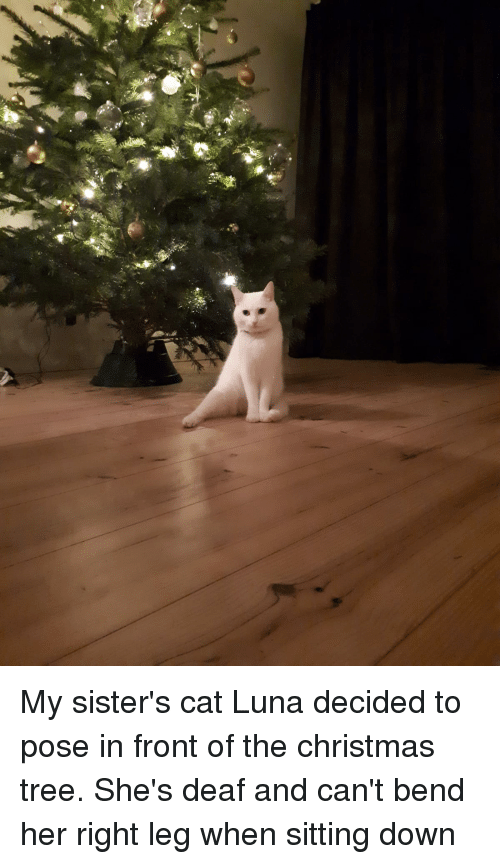 Christmas, Christmas Tree, and Tree: My sister's cat Luna decided to pose in front of the christmas tree. She's deaf and can't bend her right leg when sitting down
