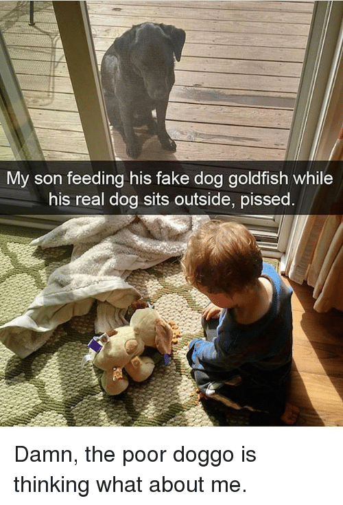 Fake, Goldfish, and Memes: My son feeding his fake dog goldfish while  his real dog sits outside, pissed Damn, the poor doggo is thinking what about me.