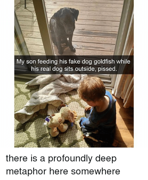 Fake, Goldfish, and Memes: My son feeding his fake dog goldfish while  his real dog sits outside, pissed. there is a profoundly deep metaphor here somewhere
