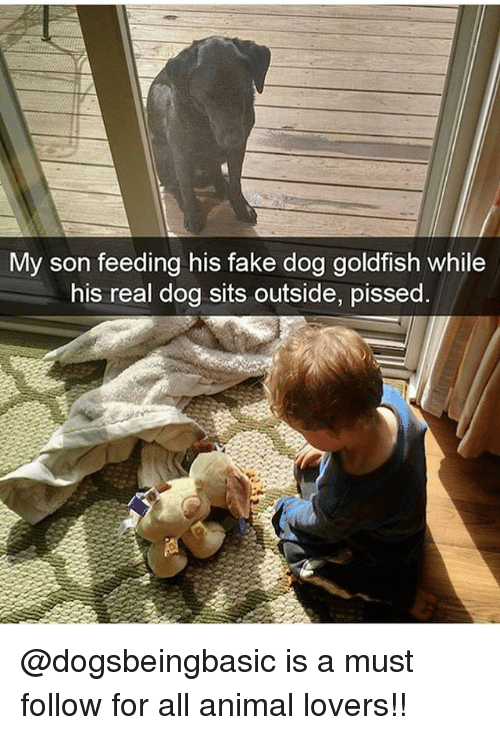 Fake, Goldfish, and Memes: My son feeding his fake dog goldfish while  his real dog sits outside, pissed @dogsbeingbasic is a must follow for all animal lovers!!