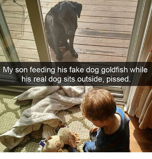 Fake, Goldfish, and Memes: My son feeding his fake dog goldfish while  his real dog sits outside, pissed.
