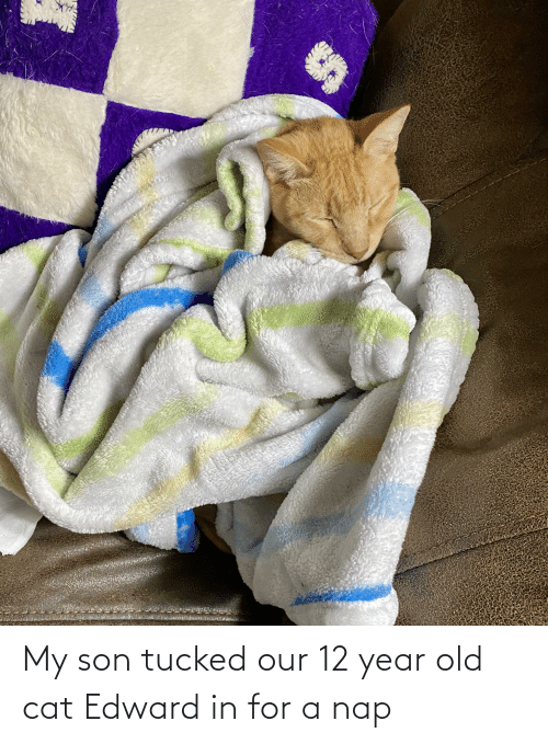 12 Year: My son tucked our 12 year old cat Edward in for a nap