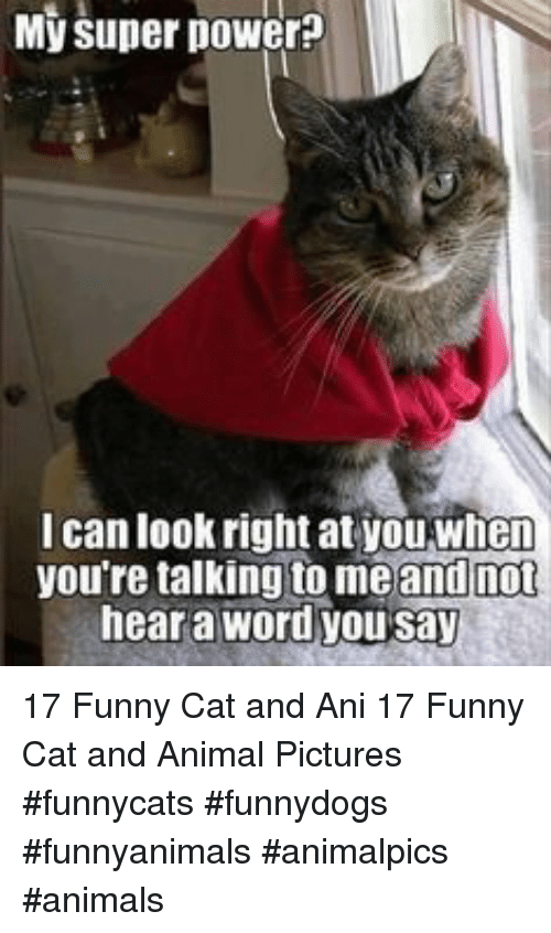 funny cat: My super power?  I can look right at youwhen  you're talking to meand not  hear a word you say 17 Funny Cat and Ani 17 Funny Cat and Animal Pictures #funnycats #funnydogs #funnyanimals #animalpics #animals