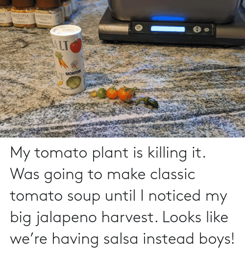 Until: My tomato plant is killing it. Was going to make classic tomato soup until I noticed my big jalapeno harvest. Looks like we're having salsa instead boys!