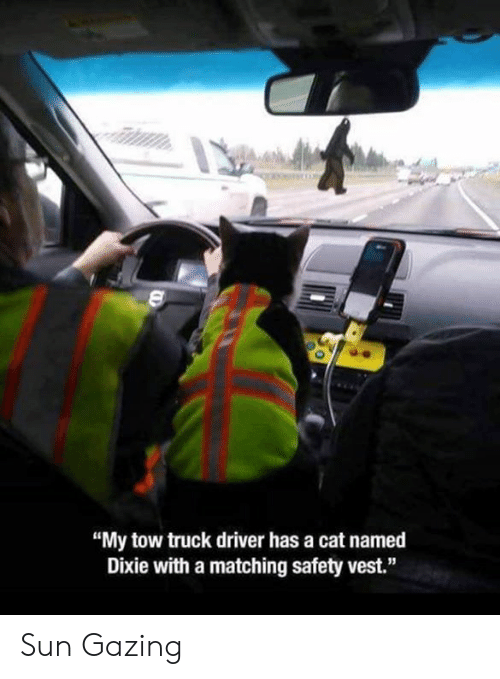 """Tow: """"My tow truck driver has a cat named  Dixie with a matching safety vest."""" Sun Gazing"""