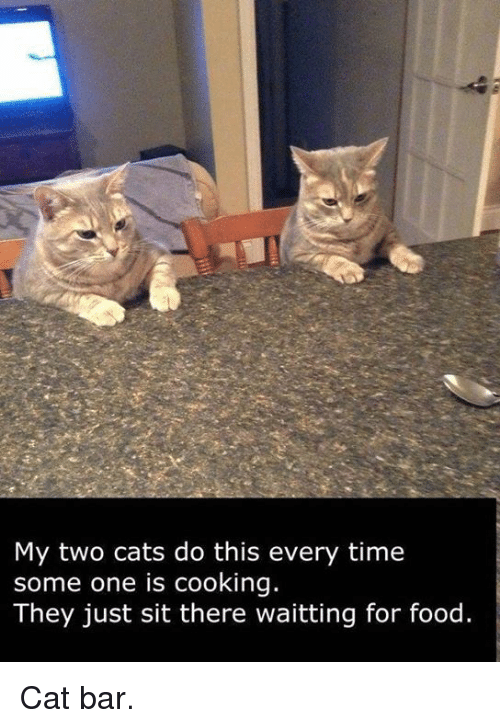 Food Cat: My two cats do this every time  some one is cooking.  They just sit there waitting for food. Cat bar.