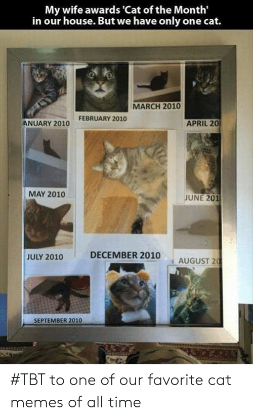 Memes, Tbt, and House: My wife awards 'Cat of the Month'  in our house. But we have only one cat.  MARCH 2010  FEBRUARY 2010  APRIL 20  ANUARY 2010  MAY 2010  JUNE 201  DECEMBER 2010  JULY 2010  AUGUST 20  SEPTEMBER 2010 #TBT to one of our favorite cat memes of all time