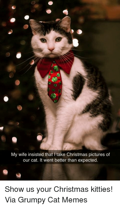 Grumpy Cats: My wife insisted that l take Christmas pictures of  our cat. It went better than expected. Show us your Christmas kitties! Via Grumpy Cat Memes