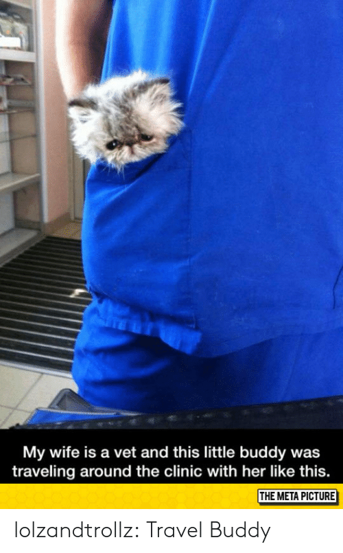 Clinic: My wife is a vet and this little buddy was  traveling around the clinic with her like this.  THE META PICTURE lolzandtrollz:  Travel Buddy
