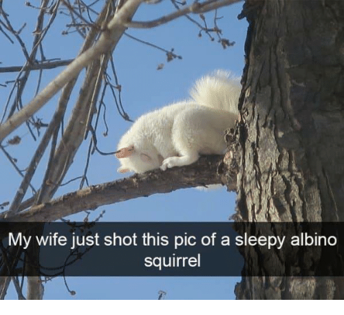 Squirrel, Wife, and Albino: My wife just shot this pic of a sleepy albino  squirrel