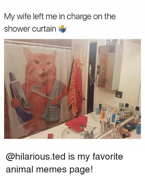 Memes Page: My wife left me in charge on the  shower curtain @hilarious.ted is my favorite animal memes page!