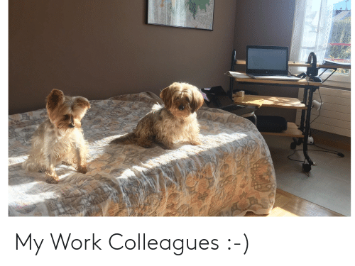 colleagues: My Work Colleagues :-)