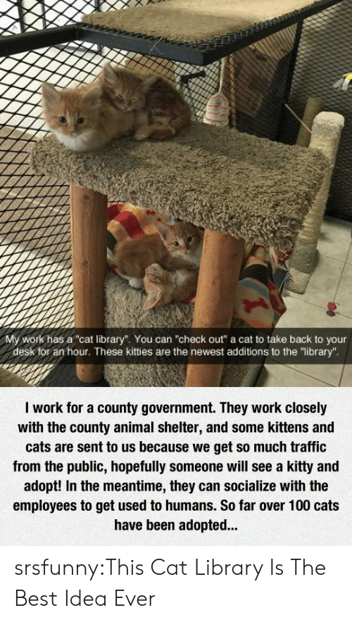 """Anaconda, Cats, and Kitties: My work has a""""cat library"""". You can """"check out"""" a cat to take back to your  desk for an hour. These kitties are the newest additions to the """"library"""".  I work for a county government. They work closely  with the county animal shelter, and some kittens and  cats are sent to us because we get so much traffic  from the public, hopefully someone will see a kitty and  adopt! In the meantime, they can socialize with the  employees to get used to humans. So far over 100 cats  have been adopted.. srsfunny:This Cat Library Is The Best Idea Ever"""