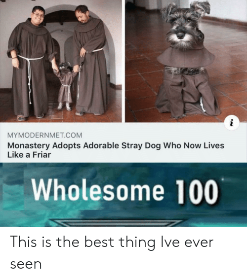 Best, Wholesome, and Adorable: MYMODERNMET.COM  Monastery Adopts Adorable Stray Dog Who Now Lives  Like a Friar  Wholesome 100 This is the best thing Ive ever seen