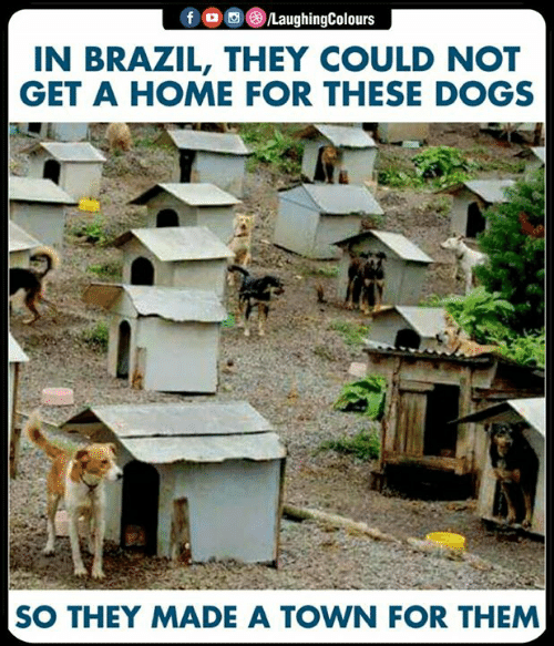 a town: N BRAZIL, THEY COULD NOT  GET A HOME FOR THESE DOGS  SO THEY MADE A TOWN FOR THEM