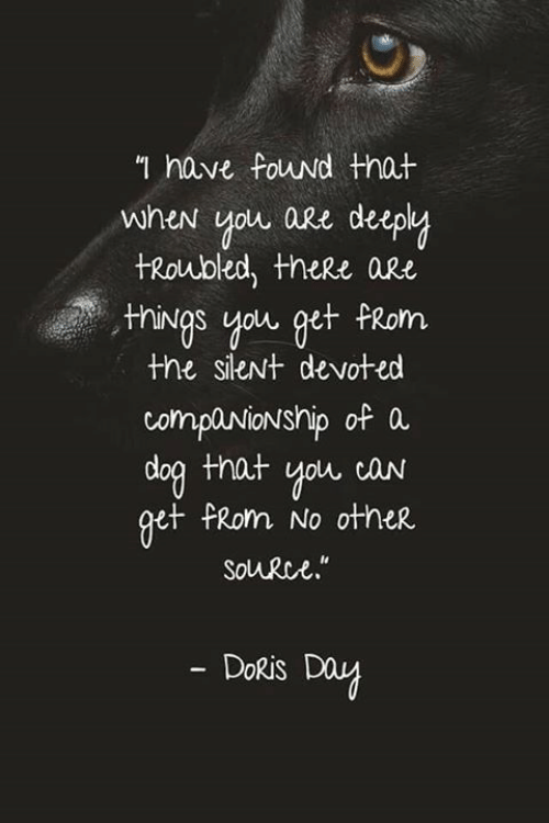 Companionship: n have Fouwd that  when you are deep  tRoubled, theRe aRe  nings you get FRom  the sieNt devoted  companionship of a  doa that you caN  et PRom No other  Solurce.  DoRis Day