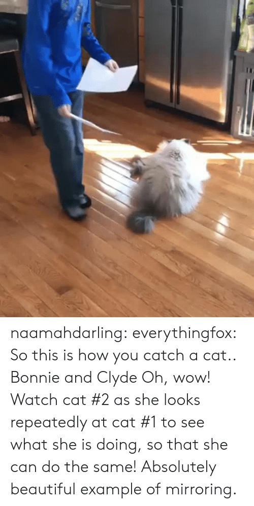 Beautiful, Instagram, and Target: naamahdarling:  everythingfox:   So this is how you catch a cat..   Bonnie and Clyde   Oh, wow! Watch cat #2 as she looks repeatedly at cat #1 to see what she is doing, so that she can do the same! Absolutely beautiful example of mirroring.
