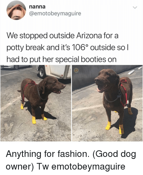 Fashion, Memes, and Arizona: nanna  @emotobeymaguire  We stopped outside Arizona for a  potty break and it's 106° outside so l  had to put her special booties on Anything for fashion. (Good dog owner) Tw emotobeymaguire