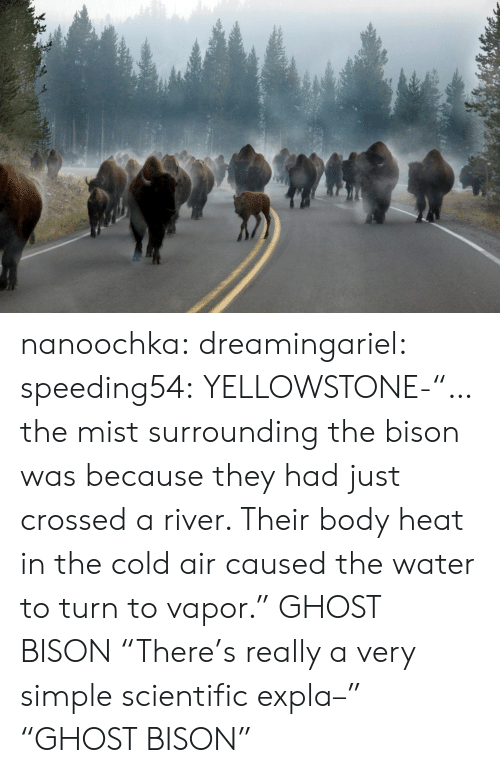 "mist: nanoochka:  dreamingariel:  speeding54:  YELLOWSTONE-""…the mist surrounding the bison was because they had just crossed a river. Their body heat in the cold air caused the water to turn to vapor.""  GHOST BISON  ""There's really a very simple scientific expla–"" ""GHOST BISON"""