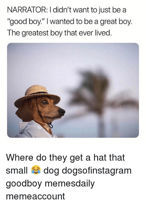 """Goodboy: NARRATOR: I didn't want to just be a  """"good boy."""" I wanted to be a great boy.  The greatest boy that ever lived Where do they get a hat that small 😂 dog dogsofinstagram goodboy memesdaily memeaccount"""