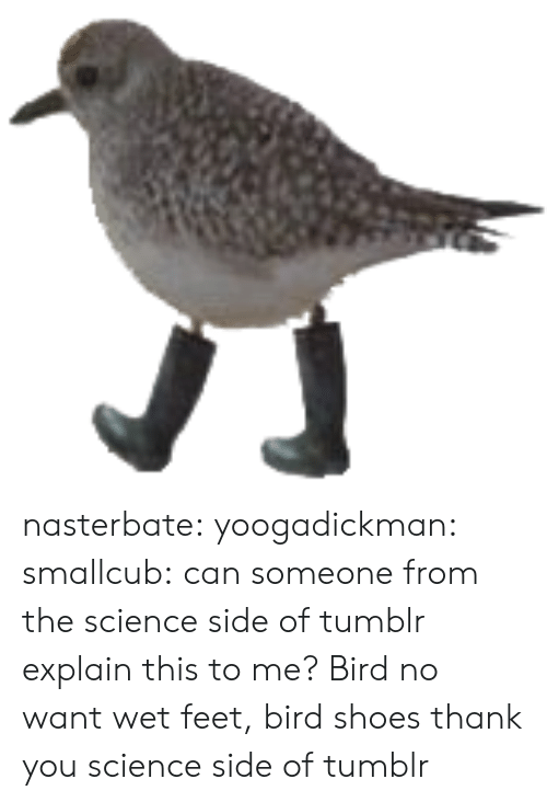 Shoes, Tumblr, and Thank You: nasterbate: yoogadickman:  smallcub:  can someone from the science side of tumblr explain this to me?  Bird no want wet feet, bird shoes  thank you science side of tumblr