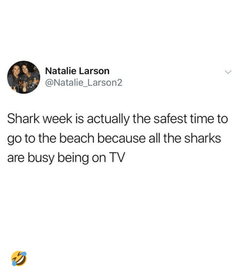 Ironic, Shark, and Beach: Natalie Larson  @Natalie_Larson2  Shark week is actually the safest time to  go to the beach because all the sharks  are busy being on TV 🤣