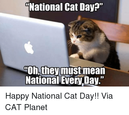 "Happy National Cat Day: National Cat Day?""  Oh, they must mean  National EveryDay."" Happy National Cat Day!!   Via CAT Planet"