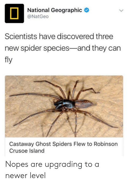 Spider, Ghost, and National Geographic: National Geographic  @NatGeco  Scientists have discovered three  new spider species-and they can  fly  Castaway Ghost Spiders Flew to Robinson  Crusoe Island Nopes are upgrading to a newer level