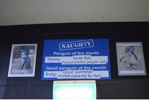 swimmer: NAUGTY  Penquin of the month  Stole fish  Timmy  Good penquin of the month  Bety Waited patiently for fish  Pushed another penguin over  Timmy  Good swimmer