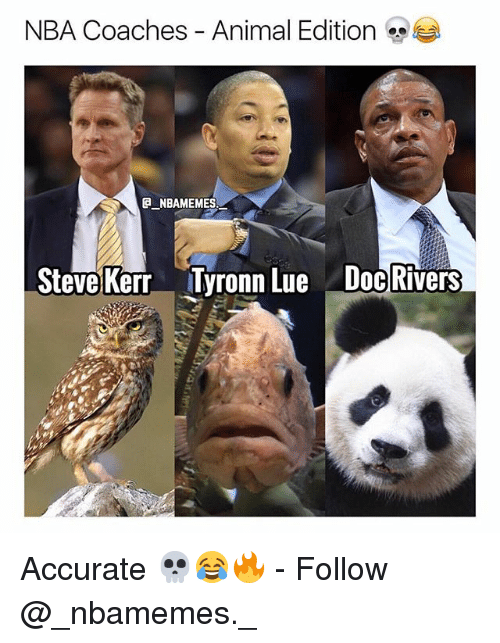 Steve Kerr: NBA Coaches - Animal Edition  NBAMEMES  Steve Kerr Tyronn Lue Doc Rivers Accurate 💀😂🔥 - Follow @_nbamemes._