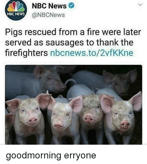 Fire, News, and Nbc News: NBC News  @NBCNews  NBC NEWS  Pigs rescued from a fire were later  served as sausages to thank the  firefighters nbcnews.to/2vfKKne goodmorning erryone