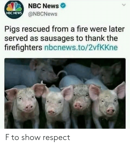 Nbc News: NBC News  @NBCNews  NBC NEWS  Pigs rescued from a fire were later  served as sausages to thank the  firefighters nbcnews.to/2vfKKne F to show respect