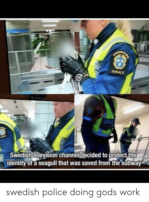 Swedish: NDA  CANONINE  VAKT  OR  Swedish television channel decided to protect the  identity of a seagull that was saved from the subway swedish police doing gods work