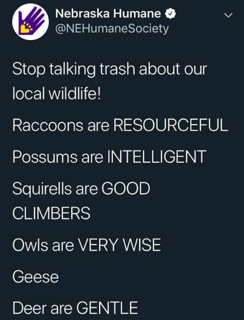 Deer: Nebraska Humane  @NEHumaneSociety  Stop talking trash about our  local wildlife!  Raccoons are RESOURCEFUL  Possums are INTELLIGENT  Squirells are GOOD  CLIMBERS  Owls are VERY WISE  Geese  Deer are GENTLE