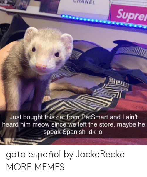 Spanish: NEL  Suprer  Just bought this cat from PetSmart and I ain't  heard him meow since we left the store, maybe he  speak Spanish idk lol gato español by JackoRecko MORE MEMES