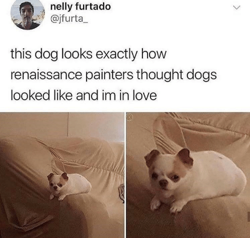 painters: nelly furtado  @jfurta_  this dog looks exactly how  renaissance painters thought dogs  looked like and im in love