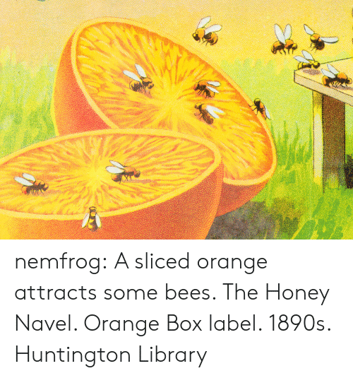 Tumblr, Blog, and Library: nemfrog: A sliced orange attracts some bees. The Honey Navel. Orange Box label. 1890s.  Huntington Library