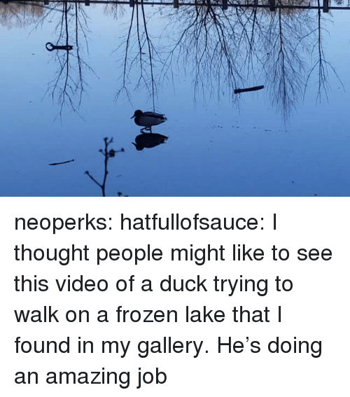Frozen, Tumblr, and Blog: neoperks: hatfullofsauce:  I thought people might like to see this video of a duck trying to walk on a frozen lake that I found in my gallery.  He's doing an amazing job