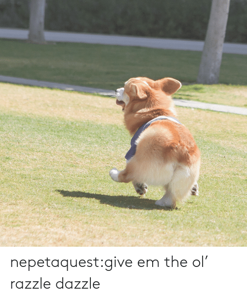 Target, Tumblr, and Blog: nepetaquest:give em the ol' razzle dazzle