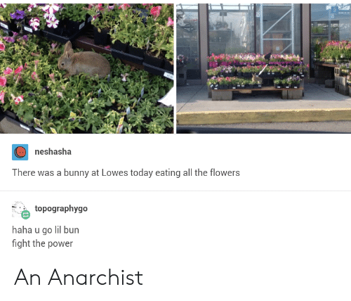Flowers, Lowes, and Power: neshasha  There was a bunny at Lowes today eating all the flowers  topographygo  haha u go lil bun  fight the power An Anarchist