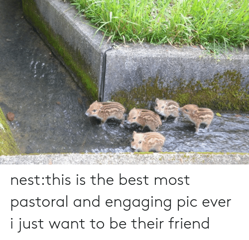 Nest: nest:this is the best most pastoral and engaging pic ever i just want to be their friend