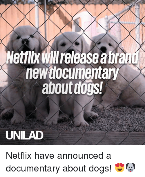 Dank, Dogs, and Netflix: Netflix Willrelease a bra  new tlocumentary  about dogs  UNILAD Netflix have announced a documentary about dogs! 😍🐶
