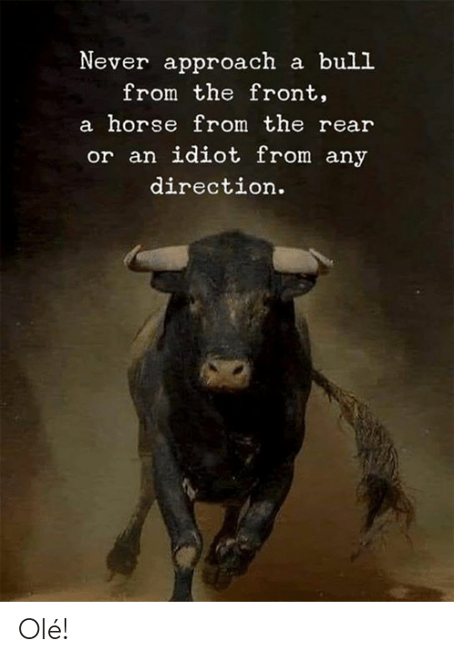 Memes, Horse, and Idiot: Never approach a bull  from the front,  a horse from the rear  or an idiot from any  direction. Olé!