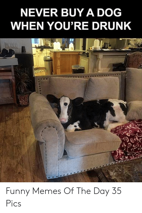 Drunk, Funny, and Memes: NEVER BUY A DOG  WHEN YOU'RE DRUNK Funny Memes Of The Day 35 Pics