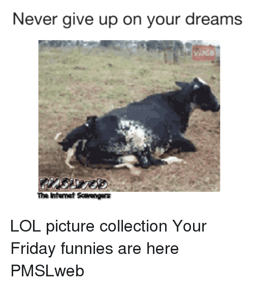 funnies: Never give up on your dreams  The Intemet Scavengers <p>LOL picture collection  Your Friday funnies are here  PMSLweb </p>