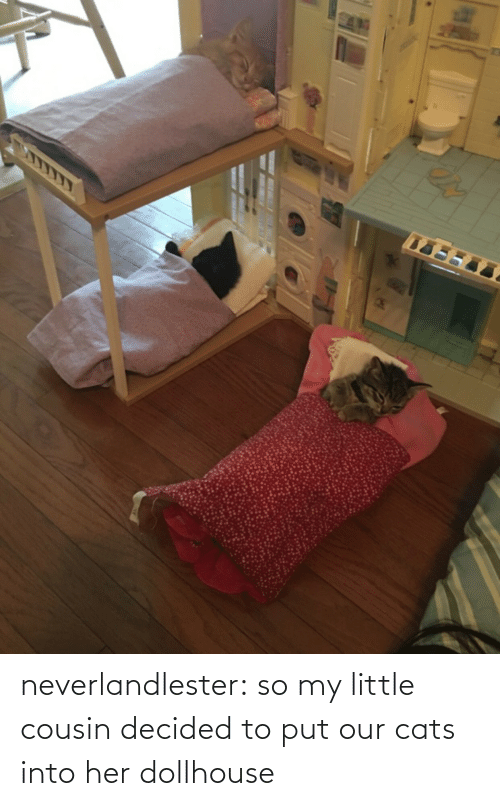 decided: neverlandlester:  so my little cousin decided to put our cats into her dollhouse