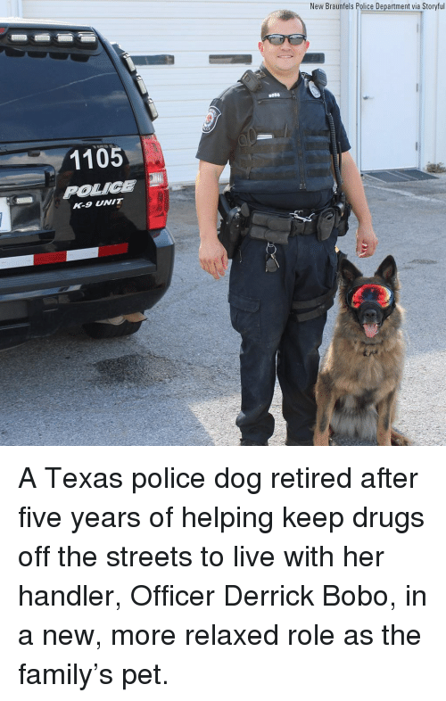 police dog: New Braunfels Police Department via Storyful  BOB0  1105  R-9 NIT A Texas police dog retired after five years of helping keep drugs off the streets to live with her handler, Officer Derrick Bobo, in a new, more relaxed role as the family's pet.